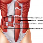 Abdominal Muscle Physiology